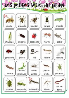 The Little Beasts of the Garden - Preparation Sheets Educational Science, French Teacher, French Class, French Lessons, Teaching French, Core French, French Tips, French Education, Cycle 2, Montessori Education
