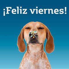@salinasregina Viernes Friday, Frases, Happy Friday, Diary Book