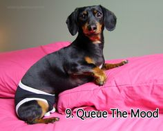 Valentine's Day Tips from a Dachshund: 10 Ways to Woo Your Woman