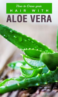 How to use Aloe Vera for Hair Growth: Discover these amazing aloe vera methods for getting rid of hair loss and enhance healthy hair growth to get shiny, beautiful and luminous hair.