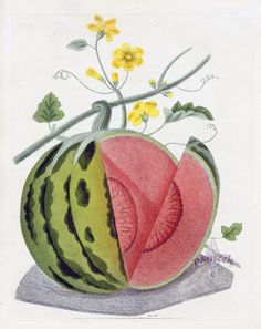 BROOKSHAW, George (1751-1823). Pomona Britannica