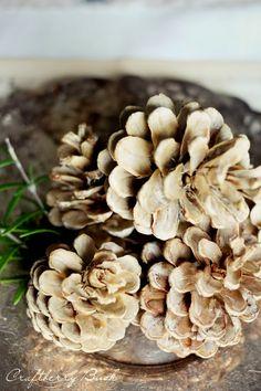 Craftberry Bush: How to bleach pine cones