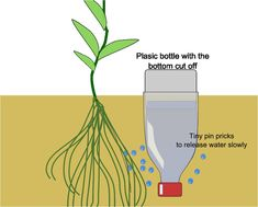 Bottle drip irrigation tutorial from You Grow Girl. #gardening #rooftop