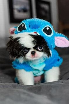 dog is not happy in this costume