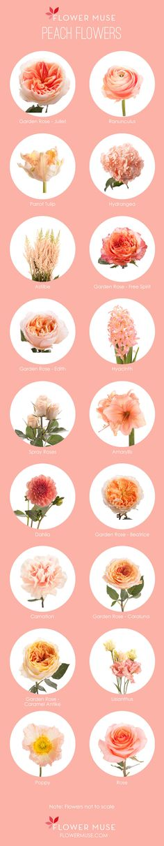 Our Favorite: Peach Flowers. See more on Flower Muse blog: http://www.flowermuse.com/blog/favorite-peach-flowers/