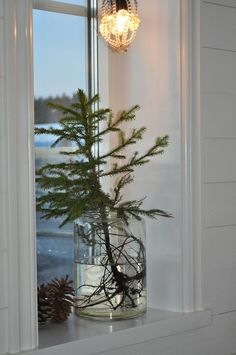 Christmas | Xmas | Jul | Noel. Natural Decoration. Tree. Evergreen