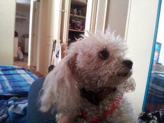 Lupita en mi depa con los gatos 2014 Dogs, Animals, Magnifying Glass, Gatos, Animaux, Doggies, Animal, Animales, Pet Dogs