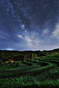 Terraced rice fields in Japan
