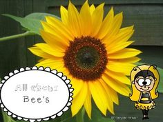 My All About Bees packet is a nonfiction unit of study that will take your students through the life cycle of a honey bee. In this packet you will find3 pages you can print and laminate that will give you and your littles bee information. a bee draw and label pagea venn diagram between 2 insects3 bee info pages with spaces to draw the informationa Can Have and Are pagedescribe what each bees job is pagetell me what you know page :)