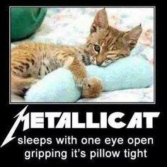 Metallicat!