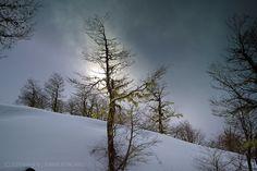 Contraluz invernal -  - Reserva Biológica Huilo Huilo (Mocho Choshuenco - Chile)