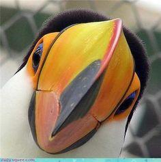 Nosy Toucan