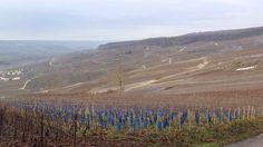 Vineyards for Folies de La Marqueterie Of Champagne Taittinger Reims, France