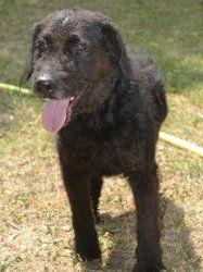 Adoption Moyen chien Senior - Assistance aux Animaux - Refuge de Carros - Alpes-Maritimes - Fox Terrier - SecondeChance.org