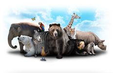 Animal Instinct: What's Your Sales Personality?