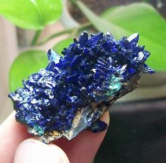 New-Sharp-Gemmy-Royal-Blue-Azurite-Mineral-Specimen-Sepon-Mine-Laos-851