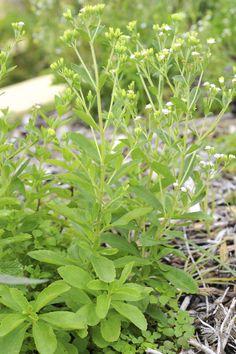Eat Your Veggies: Going Vegan in Your Backyard Garden
