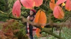 Nieuws uit de natuur: Bladeren Plants, School, Flora, Plant, Planting