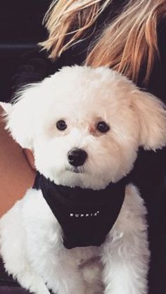 The Hottest Hairstyles for Your Dogs Animals And Pets, Cute Animals, Cute Dog Pictures, Mini Dogs, Malteser, Teacup Puppies, Dog Memorial, Dog Grooming, Puppy Love