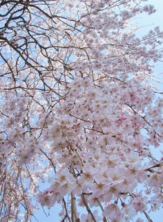 SAKURAno rules, no limitations, no boundaries it's like an art™© All Rights Reserved by ajpscs Sakura Sakura (さくら さくら) Is a traditional Japanese folk song depicting spring, the season of cherry blossom.sakura sakura (桜 桜)no-yama mo sato mo (野山も里も)mi-watasu kagiri (見渡す限り)kasumi ka kumo ka (霞か雲か)asahi ni niou (朝日に匂う)sakura sakura (桜 桜)hana-zakari (花ざかり)sakura sakura (桜 桜)yayoi no sora wa (弥生の空は)mi-watasu kagiri (見渡す限り) Yayoi, Japan, Okinawa Japan