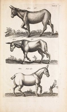 Antique illustration of unicorns, mythical creatures and zebra-like horses.
