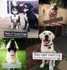 "Cupid's modeling debut- Sharing his ""baby Burd"" news with the world!   Custom Pregnancy Announcement Sign:  Photo Prop, Keepsake, Include the Dog or Sibling"