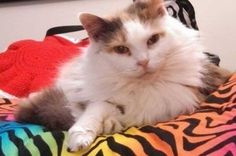 You shared my beautiful girl four times over 2014 & 2015. I am sad to report that she lost her battle with cancer on January 28, 2017. We think she was 15 or 16. But she was much loved, and even the comments of people on here showed that she was loved all over the world. Thank you for that. #cats #love #instagood #photooftheday #beautiful #cute #happy #fashion #followme #me #follow