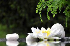 Padma Yoga Vinyasa Krama