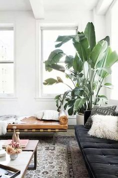 Palm plant and blue couch
