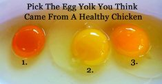 Which Egg Do You Think Came From An Actually Healthy Chicken