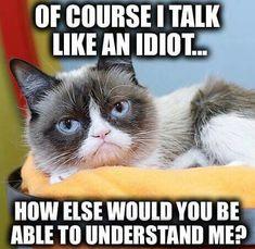 Ideas for funny memes comebacks hilarious grumpy cat Grumpy Cat Quotes, Grump Cat, Funny Grumpy Cat Memes, Cat Jokes, Funny Animal Jokes, Cute Funny Animals, Funny Animal Pictures, Funny Relatable Memes, Funny Cats