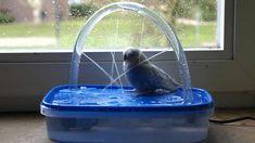 Die 19 Besten Bilder Von Wellis Papageien Wellensittich Spielzeug