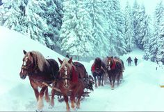 Tudor Gheorghe - Colind - Vin Colindatorii Album : Iarna Simfonica All the photos contained in this video are from Romania. Christmas Scenes, Noel Christmas, Merry Little Christmas, Winter Christmas, Winter Fun, Christmas Horses, Christmas Things, Christmas Ideas, Snow Scenes