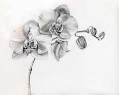 orchid tattoo designs. orchid