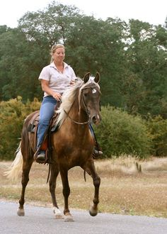 Stormy  rocky mountain horse  easyridingrockies.com