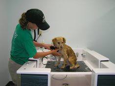 New breed dog baths perfect for the self serve dog wash business self serve dog wash newbreedtubs solutioingenieria