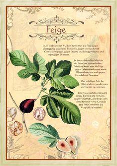 Feige … - Another! Herbal Magic, Going Natural, Ficus, Fantastic Art, Medicinal Plants, Kraut, Herbal Medicine, Magick, Garden Plants