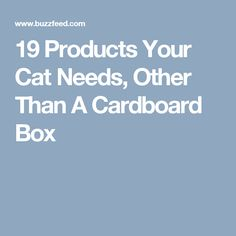 19 Products Your Cat Needs, Other Than A Cardboard Box