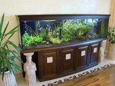 aquariums and large fish tanks and room furniture