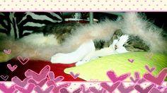 Kittynyong