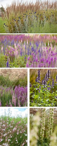 We thought you might be interested in Garden Photography - Garden View: Landscape architect Petra Pelz in Weihenstephan Prairie Planting, Prairie Garden, Meadow Garden, Dream Garden, Landscaping Plants, Garden Plants, Landscape Design, Garden Design, Garden Borders