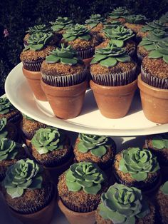 Succulent Cupcakes. Another Mind Messer Upper. Could do these with Oreo Cookie Dirt underneath too . .