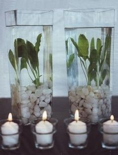Use aquarium plants for decor. So genius, glad I thought of it & looked it up!