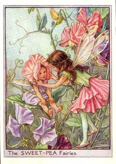 What are flower fairies? Associated with the paintings of English illustrator Cicely Mary Barker, flower fairy art and gardens . Cicely Mary Barker, Fairy Dust, Fairy Land, Fairy Tales, Fantasy Kunst, Fantasy Art, Sweet Pea Flowers, Fairy Pictures, Vintage Fairies
