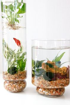 Aquaponics System - 50 Fascinating DIY Indoor Aquaponics Fish Tank Ideas Break-Through Organic Gardening Secret Grows You Up To 10 Times The Plants, In Half The Time, With Healthier Plants, While the Fish Do All the Work Indoor Aquaponics, Aquaponics Fish, Aquaponics System, Hydroponic Gardening, Organic Gardening, Container Gardening, Indoor Gardening, Vegetable Gardening, Hydroponic Fish Tank