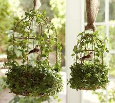So cute!  I love ivy!