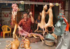 Un año más y coincidiendo con la llegada del verano, miles de perros serán sacrificados para consumir su carne en el polémico festival celebrado en la ciudad china de Yulin. #Yulin #StopYulin #perros #perro #maltratoanimal #mascotas #mascoweb