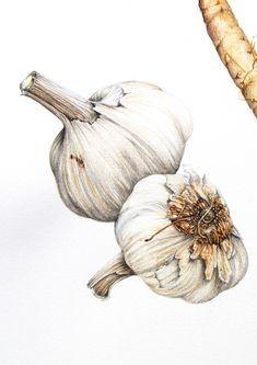 Botanical Fruit & Vegetables - Alexandra Nea