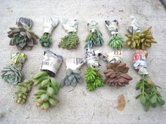 3 Easy Steps to Potting Succulents