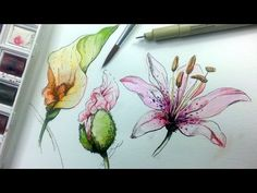 How to Draw & Paint Flowers with Ink and Watercolor Part 1 - YouTube